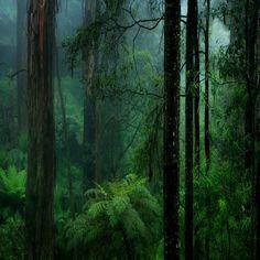 Congo rainforest                                                       …