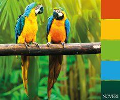 Pensiamo a colori! #colors #colori #noveri #piacenza #palette #parrot #pappagallo #paint #orange #arancione #blue #blu #verde #green #natura #nature #animals #yellow #giallo