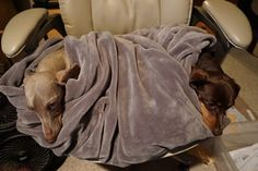 Gus and I were cold so we wrapped ourselves in a blanket. Mom pulled up another chair to sit in. Thanks mom.