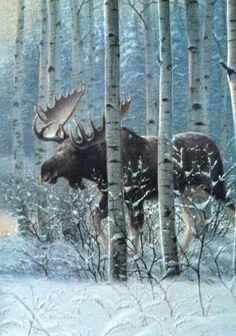Moose in birch forest