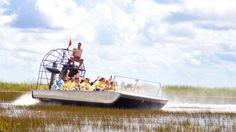 Os Everglades oferecem um precioso contato com a natureza. Você pode ver a fauna e flora local, segurar filhotes de jacaré e ainda aproveitar pra dar um passeio de barco pela costa de Miami! http://www.weplann.com.br/miami/tour-barco-everglades