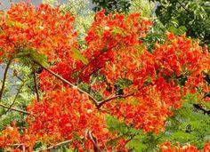 Stunning red flowers.