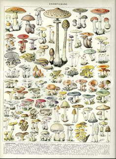 MUSHROOMS 2  Vintage French Larousse Dictionary by FolieduJour