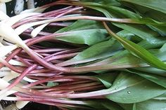Ramps from West Virginia.....the ONE thing I DON'T miss!!! bahaha