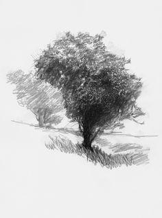 Elderflower, Artist Sean Briggs producing a sketch a day, prints available at https://www.etsy.com/uk/shop/SketchyLife ##elderflower #art #drawing #http://etsy.me/1rARc0J