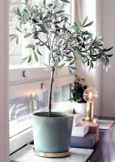 Groen in huis is terug van weggeweest! Niet alleen leuk om te zien, maar ook erg handig. Het zuivert je lucht. Handig!