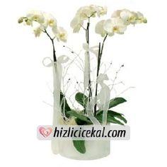 Üçlü Beyaz Orkideler  Hızlı Çiçek Al ile sevdiklerinize aynı gün teslimat seçeneği ile üçlü beyaz orkide çiçekleri sipariş edin.  http://www.hizlicicekal.com/cicekler/cicekciler/cicek/101/uclu-beyaz-orkideler/