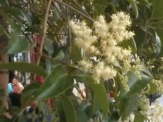 Fleur d'arbre