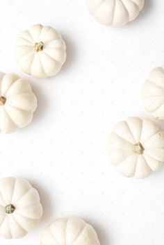 Fall styled stock photography perfect for seasonal sales and website promotion! White mini pumpkins.