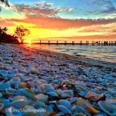 Seashells Sunset On The Dock Of Sanibel Bay Captiva Island Sea Shells Fort Myers