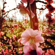 Odawara,+Japan   ... walk from an area with many plum trees, which Odawara is famous for