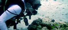 Scuba Diving Courses and Trips in Pattaya, Thailand