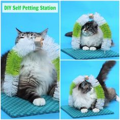 A great idea for anyone with a cat is to make a self petting station. This is a great item for any cat that needs attention when not around a lot of people.