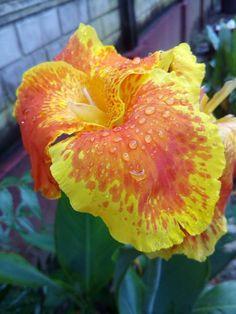 My Flower Stills