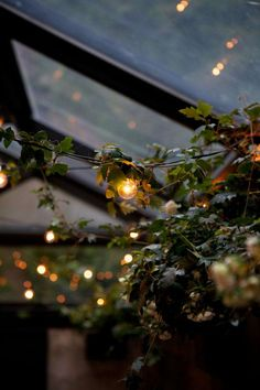 String lights + leaves.