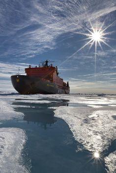the Arctic
