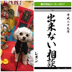 レオンの所信表明。  #書き始めメーカー  #チワプー  #チワワ  #トイプードル#chihuahua#小型犬#mix犬#dog#dogs#cute#love#lovely#family#animals#animal #insta#instabeauty#instagood#instalike#instalove#instalovers#instalook#instamood#pic#photo#pretty#instadog#愛犬#愛犬家#レオン