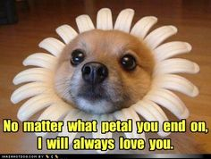 funny dog pictures - No  matter  what  petal  you  end  on,   I  will  always  love  you.
