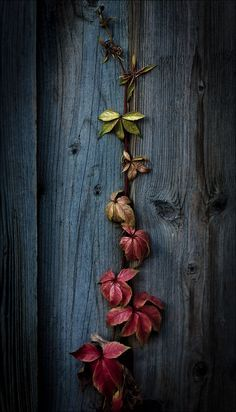 Nature as art - the colours in this image are exquisite. Flower Wallpaper, Nature Wallpaper, Wallpaper Backgrounds, Iphone Wallpaper, Cool Photos, Beautiful Pictures, Deep Autumn, Pics Art, Belle Photo