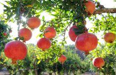 Planet Stars: Υγεία Ομορφιά:  Τρόφιμα που προστατεύουν από τον ή...