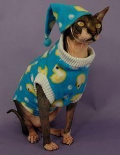 my cats definitely need pajamas. definitely.
