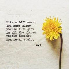Seriously contemplating a wildflower tattoo now . Seriously contemplating a wildflower tattoo now . The post Seriously contemplating a wildflower tattoo now . appeared first on Diy Flowers. Quotable Quotes, Wisdom Quotes, Quotes To Live By, Me Quotes, Tattoo Now, Back Tattoo, Pretty Words, Cool Words, Wild Flower Quotes