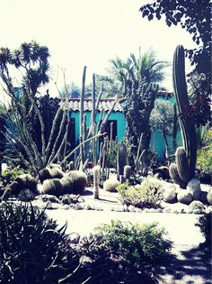 cacti are the sh*t. | Justina Blakeney Est. 1979