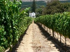 Constantia photos & pictures on fotocommunity Wine Guide, Cape Town South Africa, Restaurant Guide, Wine Tasting, Amazing Places, Dates, The Good Place, Bucket, Explore