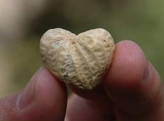 peanut heart...I was just talking to my friend about how much I love cracking peanuts and eating them, & found this!