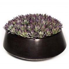 "FL1652 Green Purple Succulents in Black Ceramic Low Bowl  14""H x 16""W x 16""D"