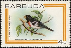 Rose-breasted Grosbeak stamps - mainly images - gallery format