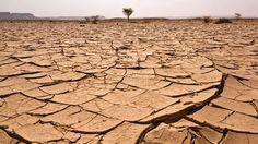 L'élevage industriel exacerbe le changement climatique.