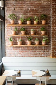 Brunswick Cafe, Brooklyn NY. Succulents in terracotta pots on wooden shelves in kitchen?