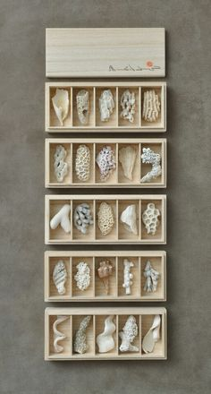 Pin by hum on stone Shell Collection, Nature Collection, Collections Of Objects, Displaying Collections, Shell Display, Box Art, Shadow Box, Sea Shells, Decoration