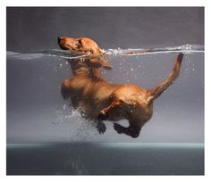 Learn how to swim better than a doggie paddle...