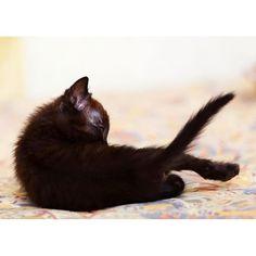 Small back Cat name is Kinako * 『あなたの背中に思う』 きなこちゃんの小さな小さな背中。 かつてあなたはこの幼い背中にどれほどの苦しみを背負っていただろうか。 あの日、海岸沿いの工業地帯でロジョウネコとして生まれたあなたは、まもなく栄養失調から目を病み視界のほとんどは塞がれた。 幼いあなたはぼんやりとした薄闇のなか音だけを頼りに生きようとした。 だがあなたの鼓膜を震わせたのは多くの恐怖だった。 ・ あなたの存在を否定する敵猫の唸り声… 虚空をつんざくような声で威嚇するカラスの群れ… 工業地帯の大地を揺らす大型車の振動… ・ やがてあなたの視界の闇は深みを増し、唯一頼りにしていた母の声すら聞こえなくなっていた。 死があなたを招こうとしていたからだ。 しかしその間際、あなたが私の声をはっきりと聞き取ったことを私は知っている。 ・ 今あなたの小さな背中を前にして私は思う。 もうあなたはその背に苦しみを背負う必要はない。 これからあなたの背を包むのは尽きることのない愛情だけなのだから。 * #photogram #canonphotography…