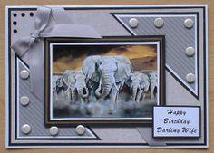 Birthday card from the Pollyanna Pickering world wildlife dvd rom