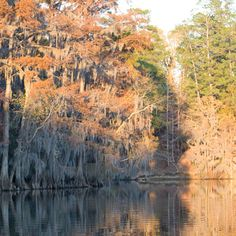 Caddo Lake, Karnack, TX - The South's Best Fall Colors - Southern Living... Took a short family trip in June 2014