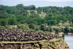 Over 1,000 safari travelers and industry experts participated in the largest survey of its kind to reveal the best safari country of Africa. The results are in and Tanzania came out the clear winne...