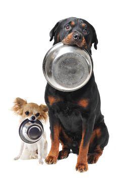 Según el tamaño de tu #perro, este necesita uno u otro pienso para crecer sano y fuerte y cuidar su salud. ¿Cuál es la talla de tu peludo? ¿Mini, medium, maxi o giant?