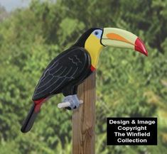 All Yard & Garden Projects - Life-Size Toucan Wood Pattern Diy Arts And Crafts, Wood Crafts, Garden Projects, Wood Projects, Winfield Collection, Atlanta Art, Wood Craft Patterns, Doilies Crafts, Wooden Bird