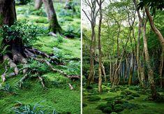 Indret din have så den er flot hele året Kyoto, Japan, Garden, Plants, Inspiration, Biblical Inspiration, Japanese Dishes, Lawn And Garden, Gardens