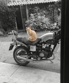 Anche ai gatti piace la moto ❤️