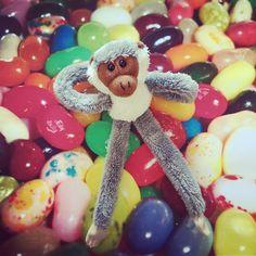 Sweet monkey! #oxbridgeacademy #oxbridgeacademysa #obi #distancelearning #collegemascot #mascot #studybuddy #support