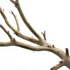 California Driftwood (Ghostwood) Natural Brown Branch 12, 18, 24, 36 [Buy Driftwood Wholesale] : Wholesale Wedding Supplies, Discount Wedding Favors, Party Favors, and Bulk Event Supplies