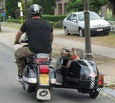 Doggie Sidecar Happiness. Black Vespa.