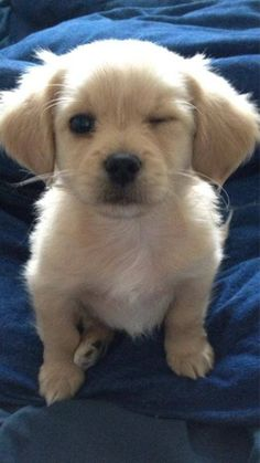 What a funny pup! This has to make you laugh! #Puppy #Wink #Cute
