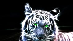 Thats the most beautiful animal in the nature, the siberian tiger. I hope you like the fractal! Please comment guys White Bengal Tiger Tier Wallpaper, Neon Wallpaper, Widescreen Wallpaper, Animal Wallpaper, Wallpaper Pictures, Nature Wallpaper, Art Tigre, Iphone Bleu, Iphone 4s