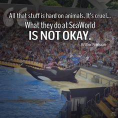 I just watched Blackfish for the first time. I've never been to Seaworld, and now I never will, or any marine park similar to Seaworld for that matter. Those poor animals should be free!