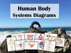 *HUMAN BODY SYSTEMS DIAGRAMS FOR STUDENT LABELING: Integumentary, Skeletal, Muscular, Respiratory, Digestive, Endocrine, Cardiovascular, Nervous, Reproductive*Labeling diagrams and scientific illustrations is a valuable way to assess student learning, reinforce concepts, and integrate previous knowledge.This product contains FULL COLOR, detailed illustrations of the human body systems.